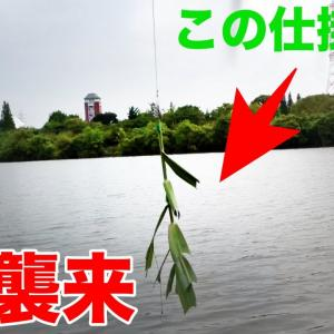 【怪魚ハンティング #01】50年生きる巨大怪魚を草で釣る【TSURIHACK TV】