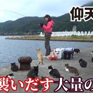 【堤防仰天】釣りをしていると大量の村猫が一斉に襲いかかる瞬間をカメラはとらえた!!!【釣りスギ四平】