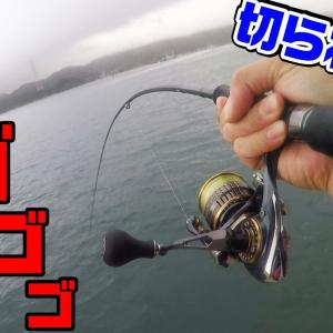 【釣りキャンプ #03】大逆転?!釣りキャンプで自己記録達成!?釣れないなら釣れる方法を!【釣りせんば】
