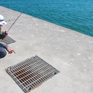 こんな所から次々と魚が釣れまくる!【俺達。秦拓馬】