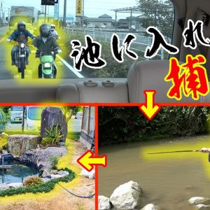 メンバー総出で池に入れる魚を捕まえる!!【釣りよかでしょう。】