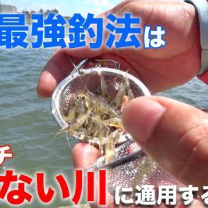 関西で最強と言われる釣法は関東イチ釣れないと言われる川でも通用するのか?・前編 エビ撒き釣りを関東で釣れるのか検証してみた【TSURIHACK TV】