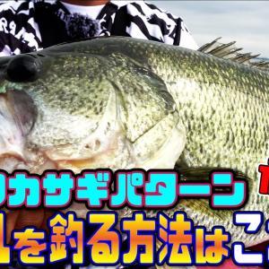 【バス釣り】ボイルを釣る方法はこれだ!怒涛のデカバス12連発!琵琶湖ワカサギパターン!【ジークラック】