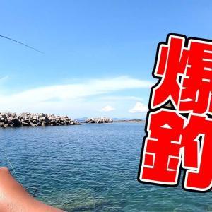 シーズン到来!!堤防と磯からアオリイカを釣りまくる!!【釣りいろは】