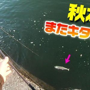 爆釣シーズン到来!!堤防ショアジギングで旬の味覚が次から次へと…【釣りいろは】
