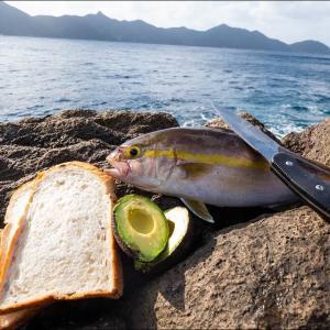 秋の地磯で青物狙い。釣り場で新鮮な魚を捌いて最高の朝飯を食べたい。【突撃!ヨネスケのツリタビch】