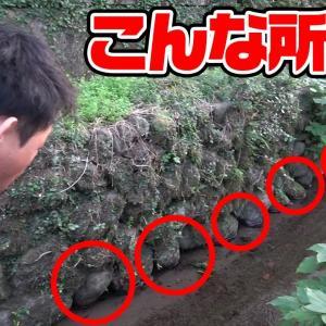 この穴に猫じゃらしを突っ込むと…【釣りいろは】