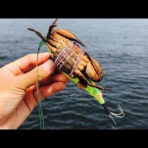 今日はいつもと少し違った釣りでした。【釣りドラ】