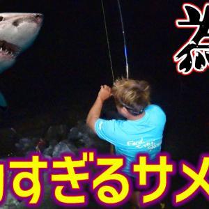 【ビーチザメ #01】サメ目撃!ビーチに現れた数百キロのサメを捕獲せよ!!【ハイサイ探偵団】