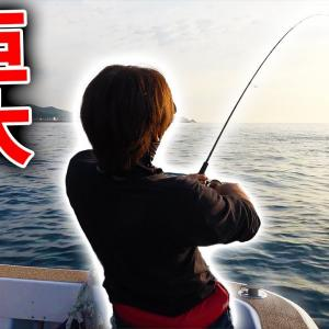 前日にアオリイカが70杯釣れた海でエギングをしてみると・・・【釣りよかでしょう。】
