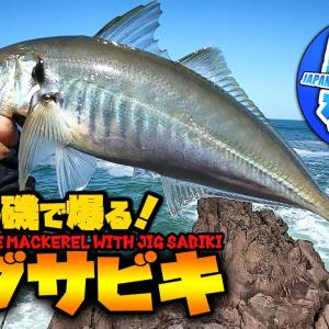【爆釣ジグサビキ】昼間の磯のサラシの中はデカアジだらけ?やっぱりジグサビキは最強だった!【釣りなんですch】