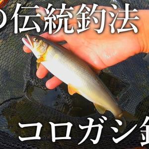 【鮎を求めて】伝統釣法のコロガシ釣りに挑戦【ぬこまた釣査団】