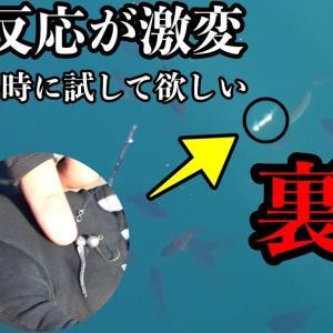 """魚がいるのに釣れない…そんな時に試したい""""激セコフィッシング""""とは?渋い時のアジングにも超オススメ【TSURIHACK TV】"""