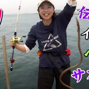 GO!GO!九ちゃんフィッシング #428『春のイカダ五目釣り!(後篇)泳がせ釣りからの~伝説のイワシ釣り?』
