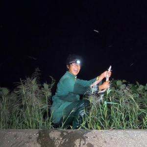 夜の田んぼでウナギが異常発生【釣りいろは】