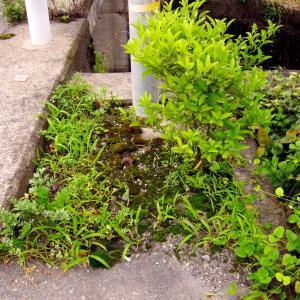 2020年07月22日(水)・・・mini畑の草むしり、0722
