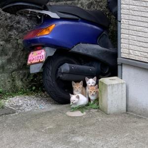 野良猫の赤ちゃん保護してくれませんか?