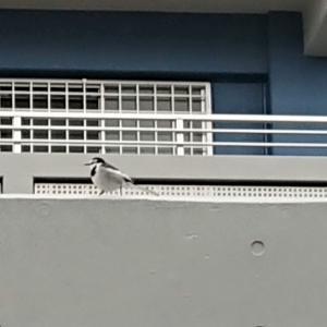 野鳥が戻ってきました