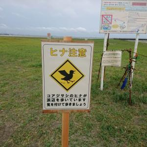 コアジサシの保護区@検見川浜
