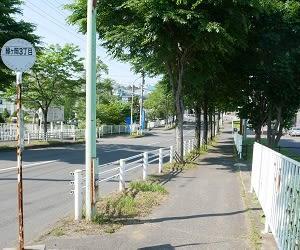 緑ケ岡通の街路樹200720