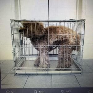 【ご協力のお願い】動物愛護法改正に伴う繁殖犬猫用ゲージサイズがひどく狭いのよ(@_@)
