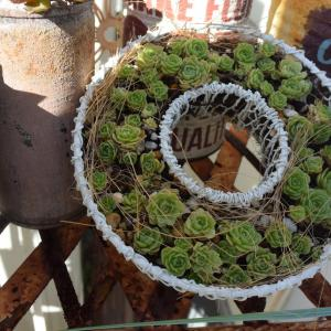プラティフィラのリースと、ブリキポットの寄せ植え。