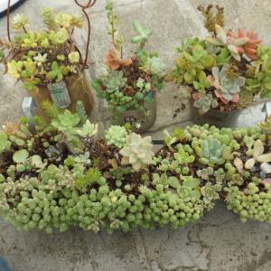 荒れまくった寄せ植えを再生。