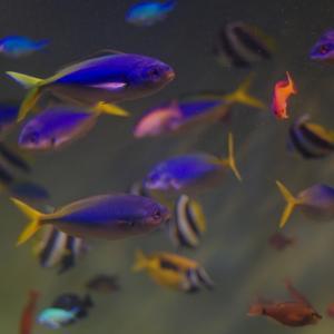 【20万HIT&200記事到達記念企画】僕は魚が、大好きなんだ。 ―第一部・ぼくとさかな―