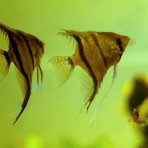 【20万HIT&200記事到達記念企画】僕は魚が、大好きなんだ。 ―第三部・ぼくとしものせき―