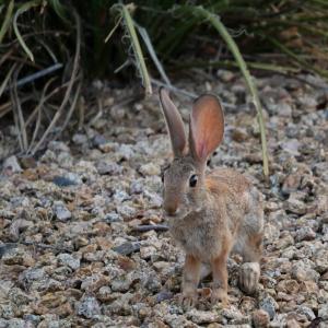 ウサギは動いてるものしか見えない?