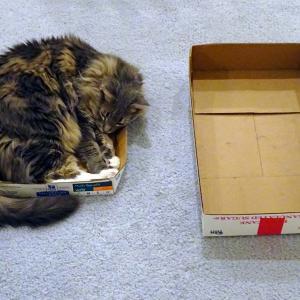 猫は狭い箱が好き