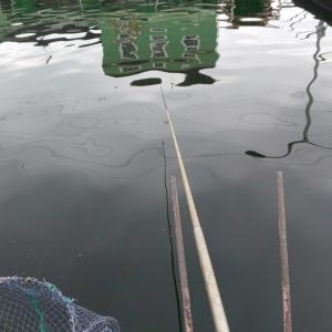 2019.6.30の釣果報告 雨で出撃できんときはココだね(^_^)