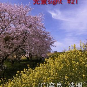 日本で新型コロナがオーバシュートしたのに死者が少なかったのは