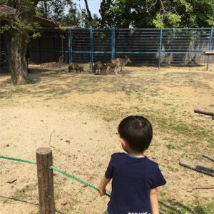 3歳2ヶ月 3回目の動物園