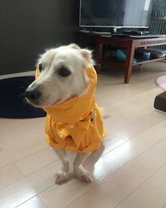 犬 カッパ かわいい