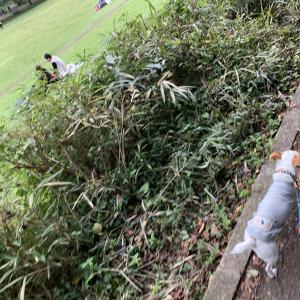 砧公園を散歩