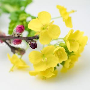 花を飾る。。☆