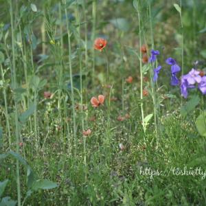 野に咲く花が好き。。☆