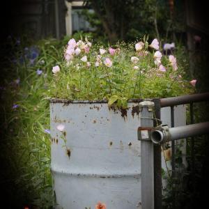 ドラム缶に花を飾る。。☆