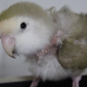 急遽、小鳥の病院へ