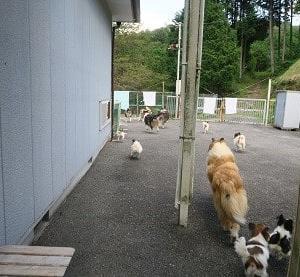 お散歩だぁ~~