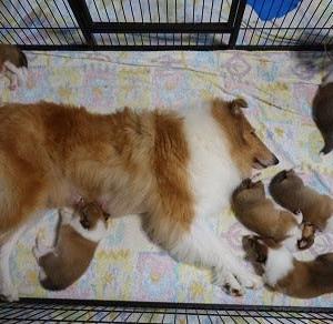うさ子の子犬、生後3週間が経ちました。