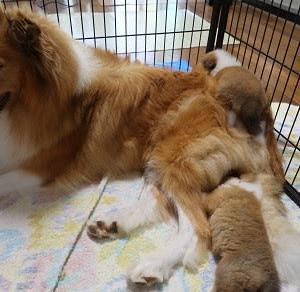 うさ子の子犬、生後23日目
