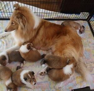 うさ子の子犬、生後26日目
