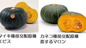 農産品 中国の状況をレポート「かぼちゃ」