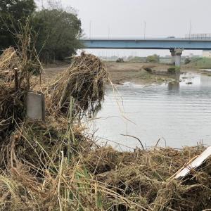 【京浜河川事務所の知られざる功績】二子玉川の多摩川氾濫を最小限に防いだ防波堤増強工事