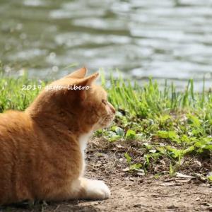 池を見ていたネコ
