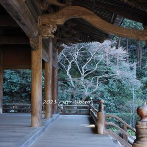 冬のお寺 と にゃん