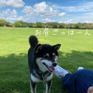 秋の一日 吉田公園へ