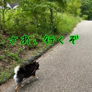 久しぶりの田貫湖